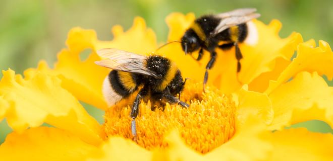 Ученые нашли причину разрушения пчелиных семей - Фото