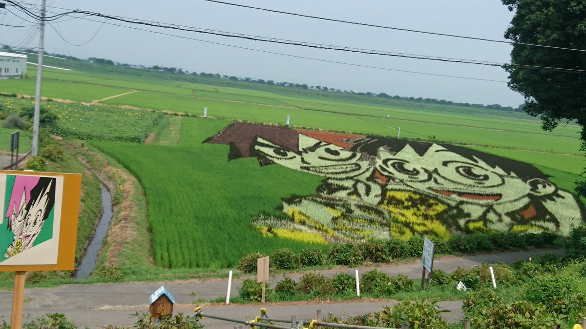 В Японии украсили рисовые поля масштабными 3D-рисунками - фото - новости  Украины, Мир - LIGA.net