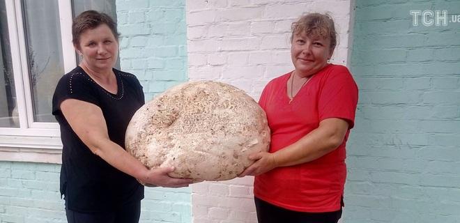 В Киевской области найден гриб-гигант весом почти 18 кг - фото - Фото