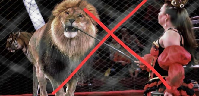 Закон о запрете животных в коммуналке