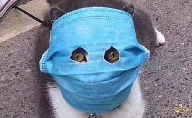 коронавирус у собак передается ли кошкам