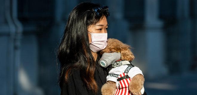 собака носитель коронавируса