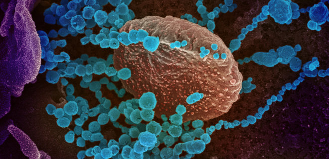 стадии коронавирус