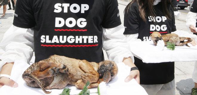 Уроки коронавируса. В китайском Шэньчжэне с 1 мая – запрет есть кошек и собак