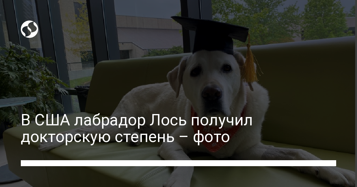 В США лабрадор получил докторскую степень – фото