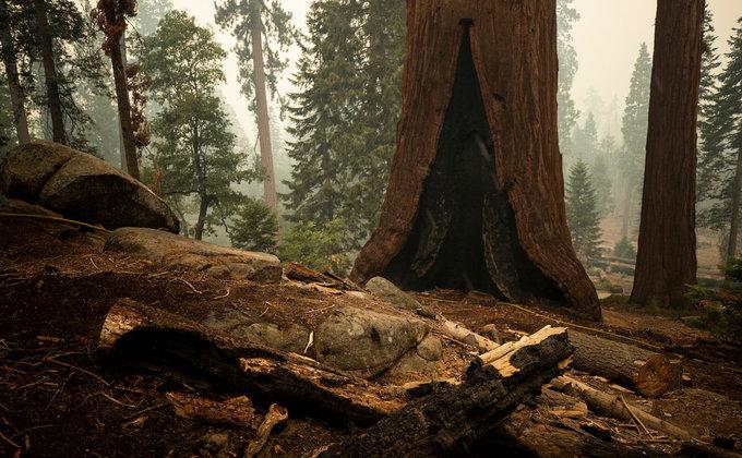 Гігантські секвої у вогні. Від удару блискавки горить нацпарк у Каліфорнії – фоторепортаж